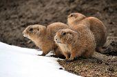 Animals -  in winter