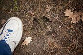 Moose Track, Footprint Step On Ground