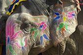 Traditional elephant makeup in Jaipur, Rajasthan, India.