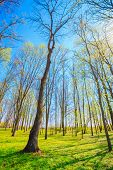 Spring Season In Park. Green Young Grass, Trees On Blue Sky Background