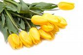 Beautiful Bouquet Of Yellow Tulips