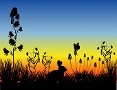 Meadow_Sunset