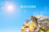 stock photo of craw  - metaphor of success with turtle and sun background. ** Note: Shallow depth of field - JPG