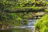 stock photo of fallen  - Autumn river like a green tunnel with a fallen tree in Belgium - JPG