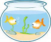 Fish In  Bowl Aquarium