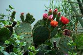 Floración Cactus