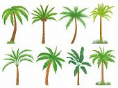 Palm Trees. Tropical Tree Green Leaves, Beach Palms And Retro California Greenery Isolated Vector Se poster