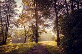 Morning Misty Autumn Park. Misty Morning. Fog In The Park. Picture Autumn Park. Background Foggy Aut poster