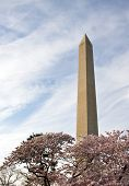 Washington Monument With Branches Of Cherry Blossom poster