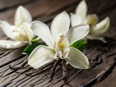 Dried vanilla sticks and vanilla orchid on wooden table. Close-up. poster