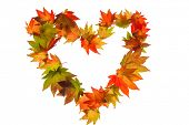 the colorful messenger of autumn. leaves on a white background in a heart shape. symbol for love photo