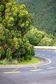 Lush Forest  In Macizo De Anaga, Tenerife, Spain.