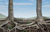 stock photo of stability  - Strong partnership and foundation as a business concept of stability and loyalty with two trees with roots connected together as a symbol of agreement and merging forces together for success - JPG