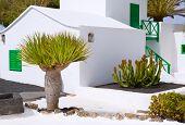 Lanzarote san Bartolome monumento Campesino en Islas Canarias