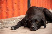 Dog Laying on Sidewalk Thinking