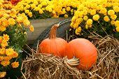 Fall Still Life