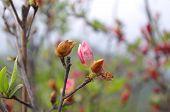 Beautiful azalea flower at the mountain of china pro Guangdong