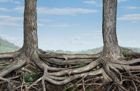 picture of merge  - Strong partnership and foundation as a business concept of stability and loyalty with two trees with roots connected together as a symbol of agreement and merging forces together for success - JPG