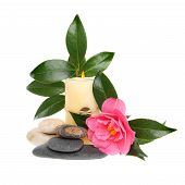 Camellia And Candle