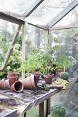 Overturned pots on workbench in greenhouse