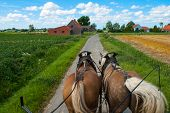 picture of yoke  - Through the flemish fields with horse and covered wagon - JPG