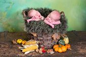 Rustic nature image of two newborn twin babies in a wicker autumn basket