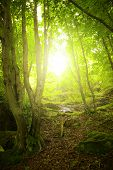Sunlight in the green forest, spring time