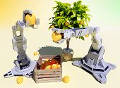 Mechanical robots collect oranges from the tree.