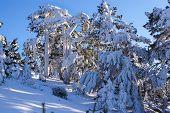 Winter in the mountain navacerrada madri dspain