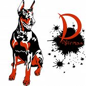 picture of doberman pinscher  - dog Doberman Pinscher breed sitting and smiling - JPG