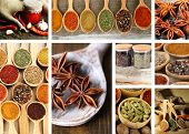 Collage of different spices