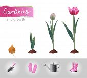 Growing tulip and gardening icons