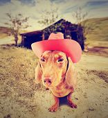 dachshund dog cowboy in front of a barn