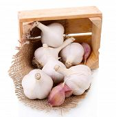 Fresh garlic in wooden box isolated on white