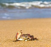 By the Sea Funny Crab
