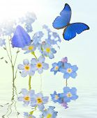 light blue forget-me-not flowers and butterflies on bright background