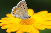 beautiful butterfly on yellow flower