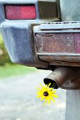 Yellow Flower In A Tail Pipe