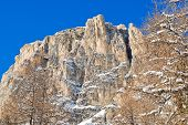 Bare Tree And Rock In Dolomites Mountain