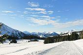 Ski Tracks In Snow Forest In Alps