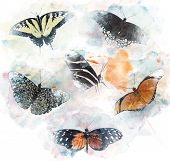 Watercolor Digital Painting Of  Butterflies