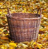 An empty wicker basket in autumn orchard.