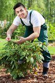 Gardener Taking Care Of Plant