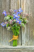 posy of blooming borage