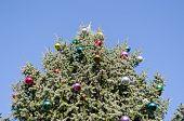 Christmas Tree Glassy Ball On Blue Sky Background