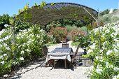 image of oleander  - Diner table in Provence France near oleander plants - JPG