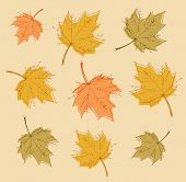 Abstract autumn background with colorful leaves. Vector.