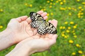 Beautiful butterfly on hands, outdoors
