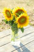 Beautiful sunflowers in vase on wooden table on field background