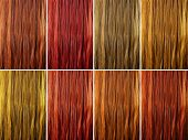 Long Female Hair As Color Samples
